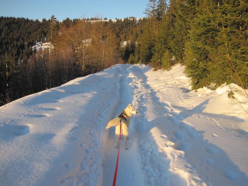 Saskia dans la neige en décembre 2011 - Page 2 326