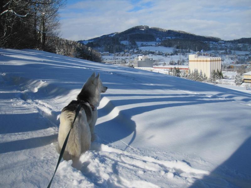 Nouvelles courses de Saskia dans la neige 3313
