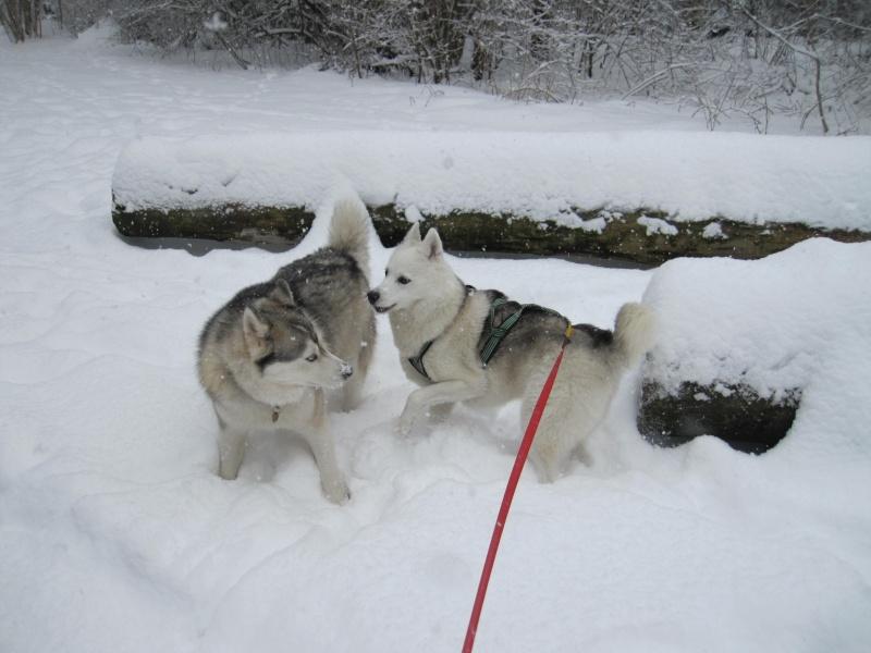 Nouvelles courses de Saskia dans la neige 343