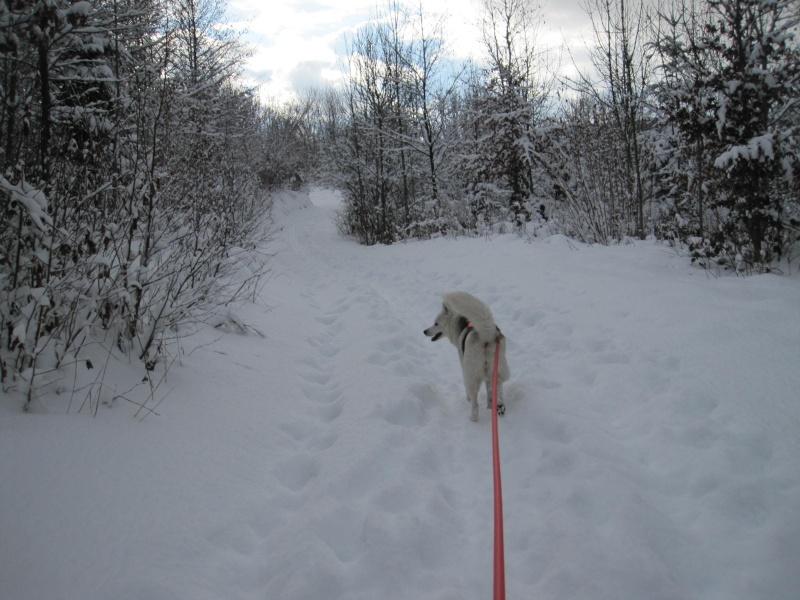 Nouvelles courses de Saskia dans la neige 3713