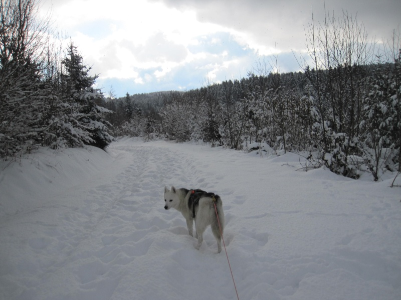 Nouvelles courses de Saskia dans la neige 3914