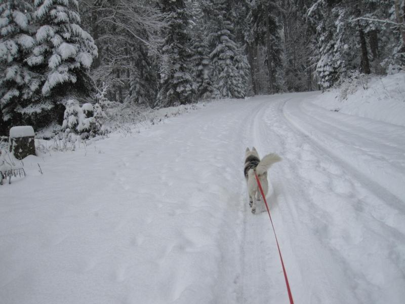 Nouvelles courses de Saskia dans la neige 4113