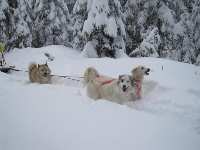 Deux attelages perdus dans 50 cm de neige poudreuse! 418