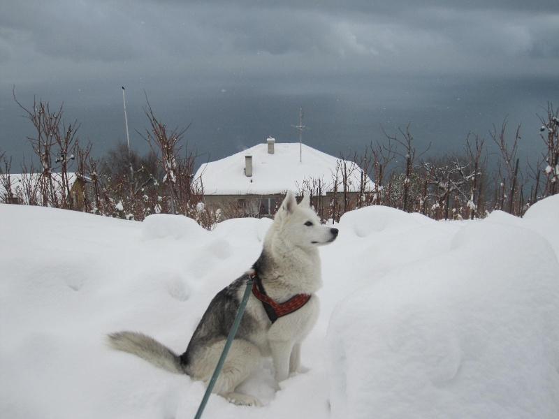 Saskia dans la neige en décembre 2011 419