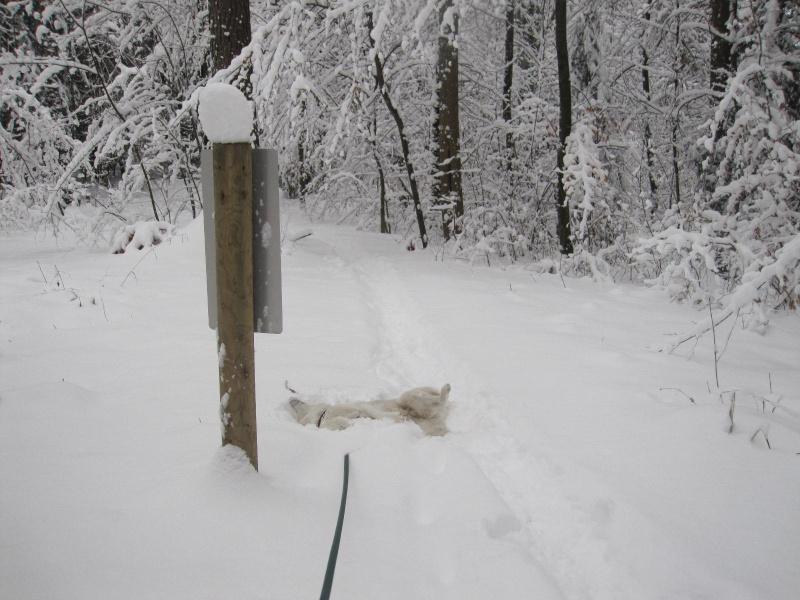 Saskia dans la neige en décembre 2011 420