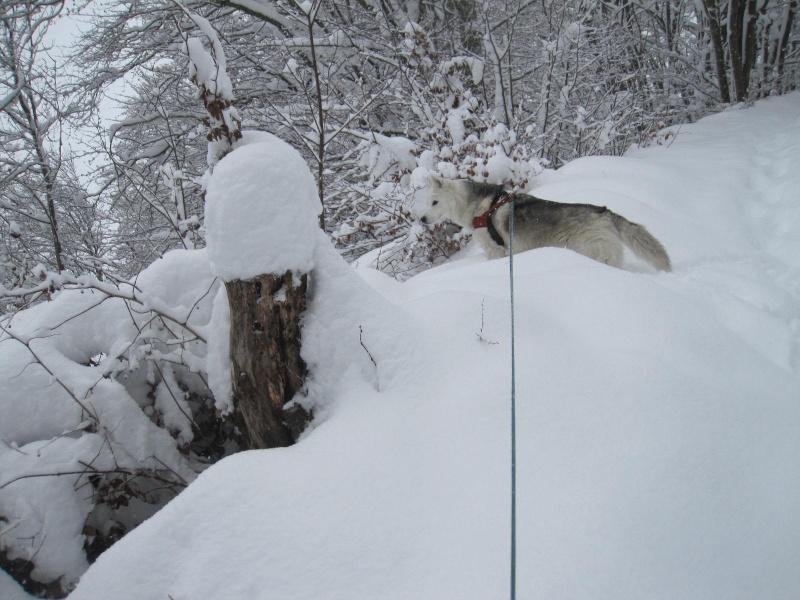 Saskia dans la neige en décembre 2011 421