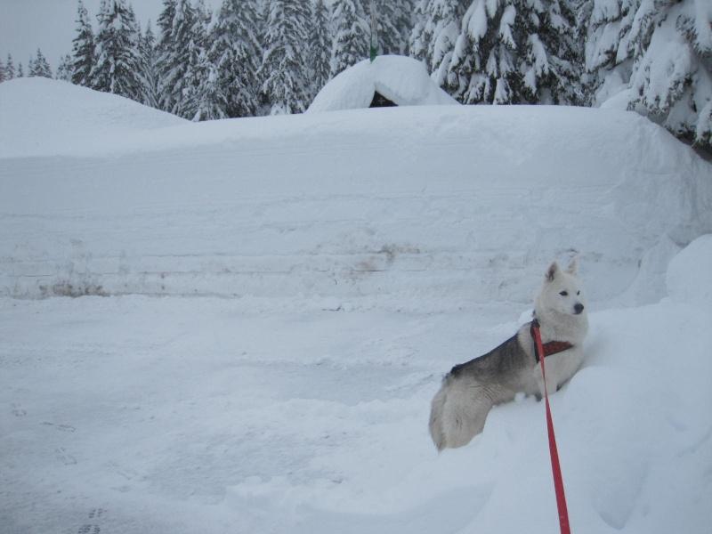 Saskia dans la neige en décembre 2011 422