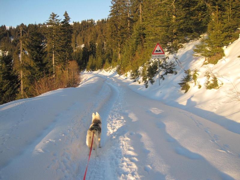 Saskia dans la neige en décembre 2011 - Page 2 424