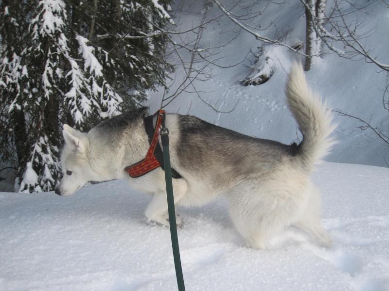 Saskia dans la neige givrée 429