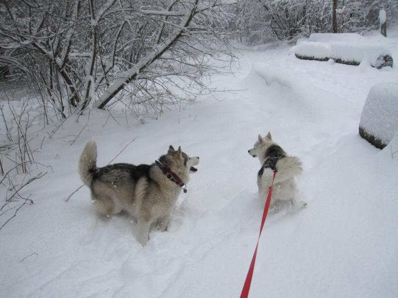 Nouvelles courses de Saskia dans la neige 439