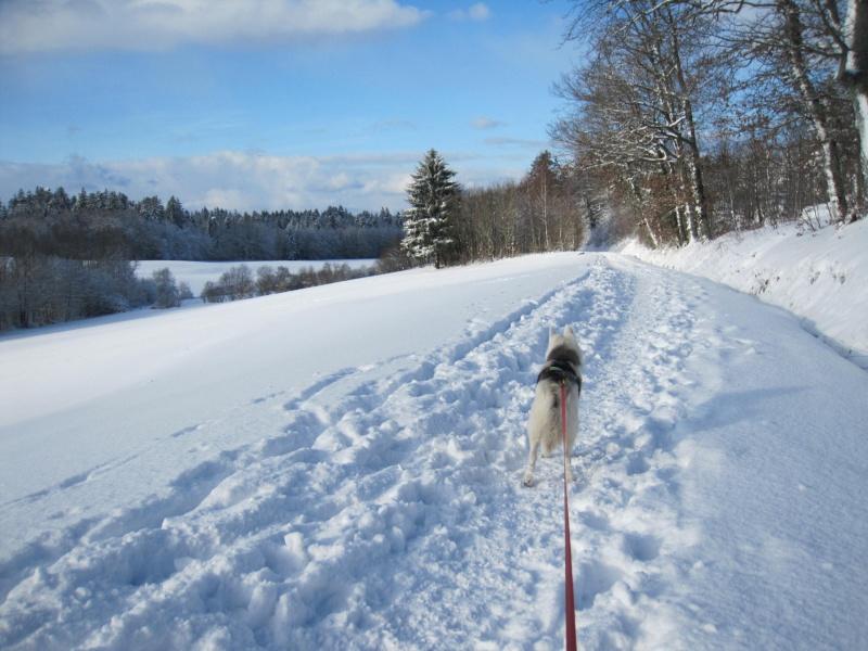 Nouvelles courses de Saskia dans la neige 4614