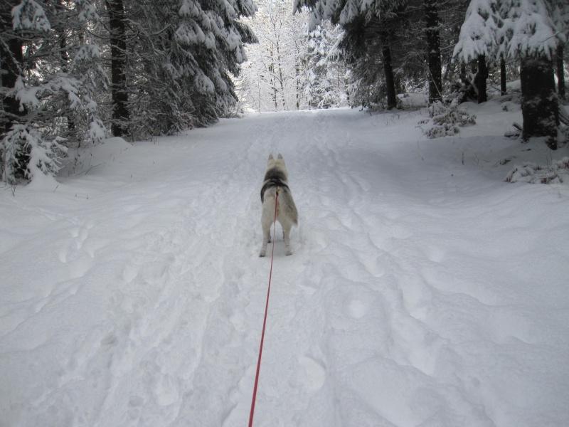 Nouvelles courses de Saskia dans la neige 4712