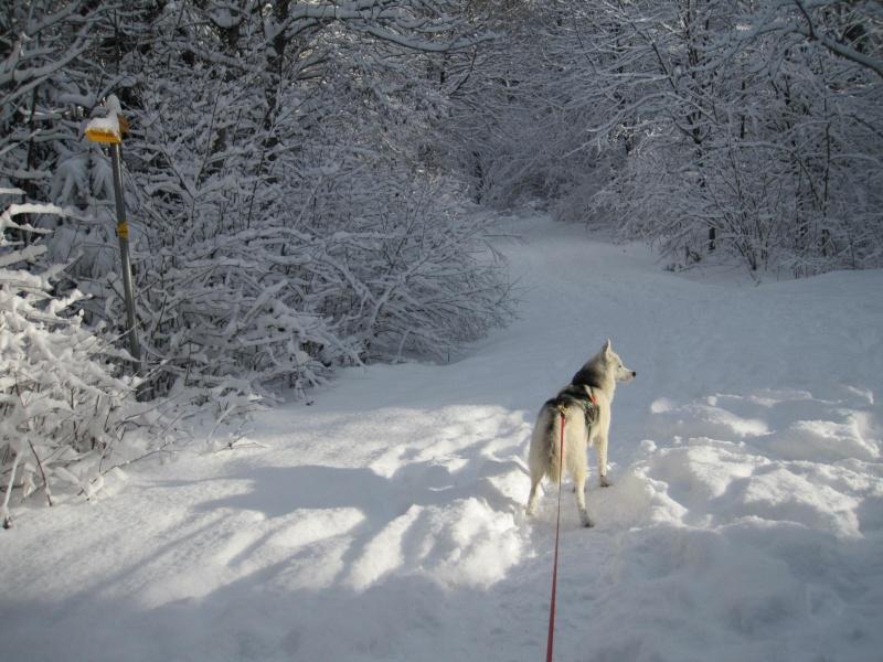 Nouvelles courses de Saskia dans la neige 4812