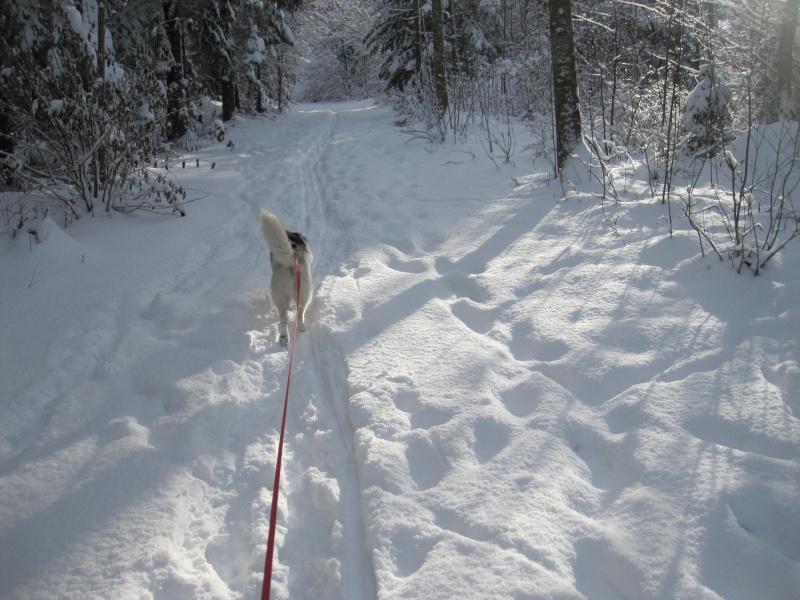Nouvelles courses de Saskia dans la neige 4911