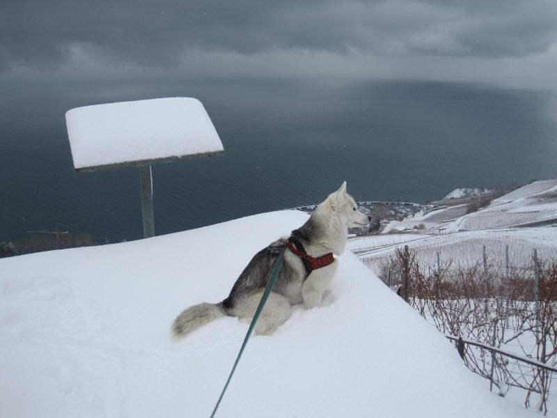 Saskia dans la neige en décembre 2011 518