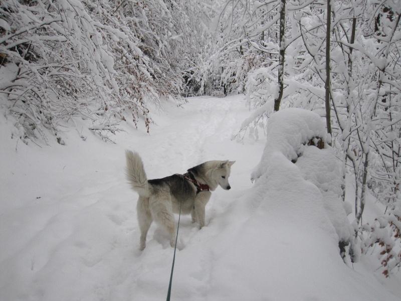 Saskia dans la neige en décembre 2011 519
