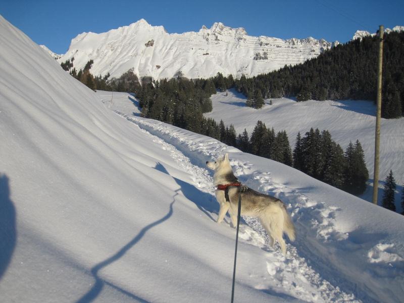 Saskia dans la neige en décembre 2011 522