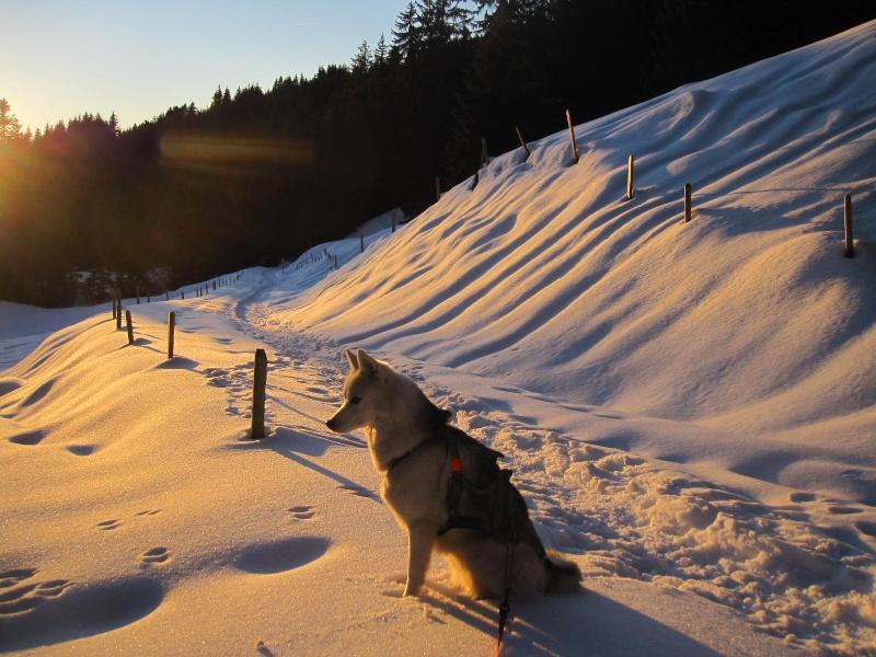 Saskia dans la neige en décembre 2011 - Page 2 523