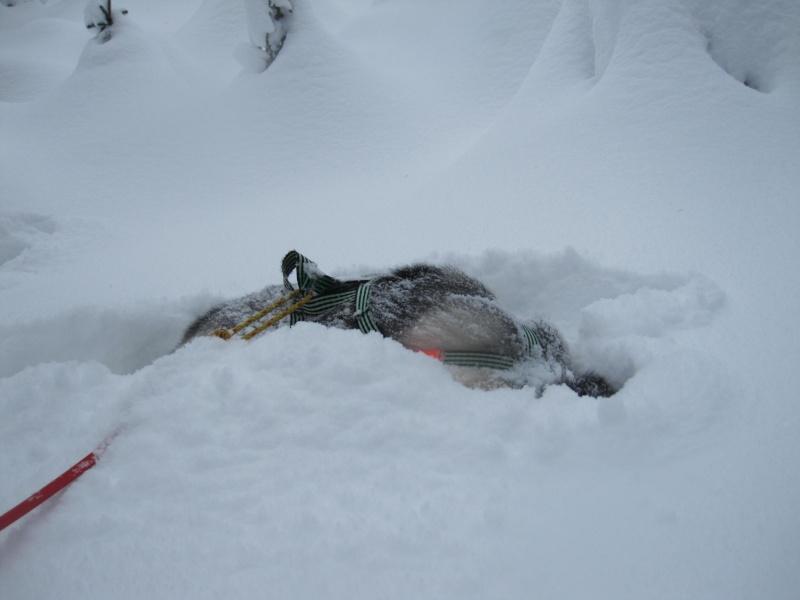 Nouvelles courses de Saskia dans la neige 537