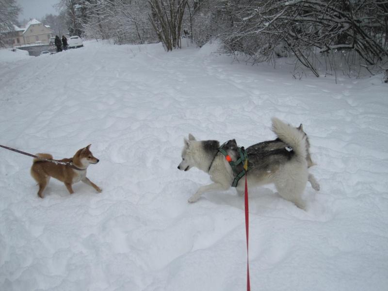 Nouvelles courses de Saskia dans la neige 538