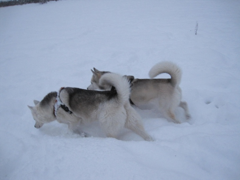 Nouvelles courses de Saskia dans la neige 539