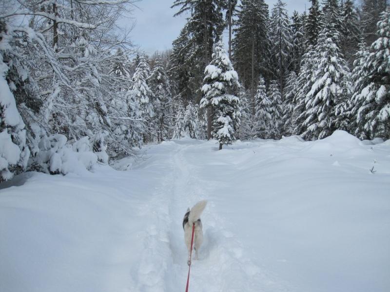 Nouvelles courses de Saskia dans la neige 541