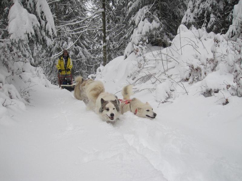 Deux attelages perdus dans 50 cm de neige poudreuse! 617