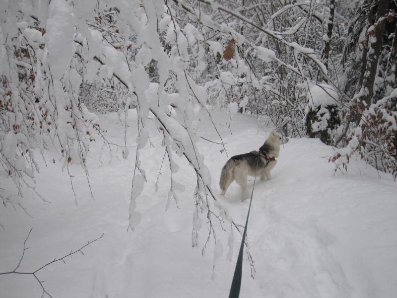 Saskia dans la neige en décembre 2011 618