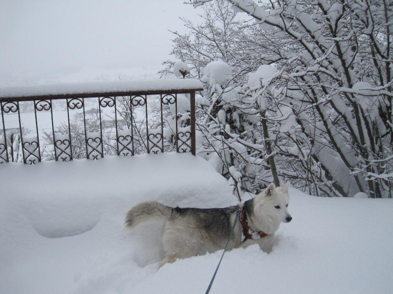 Saskia dans la neige en décembre 2011 619