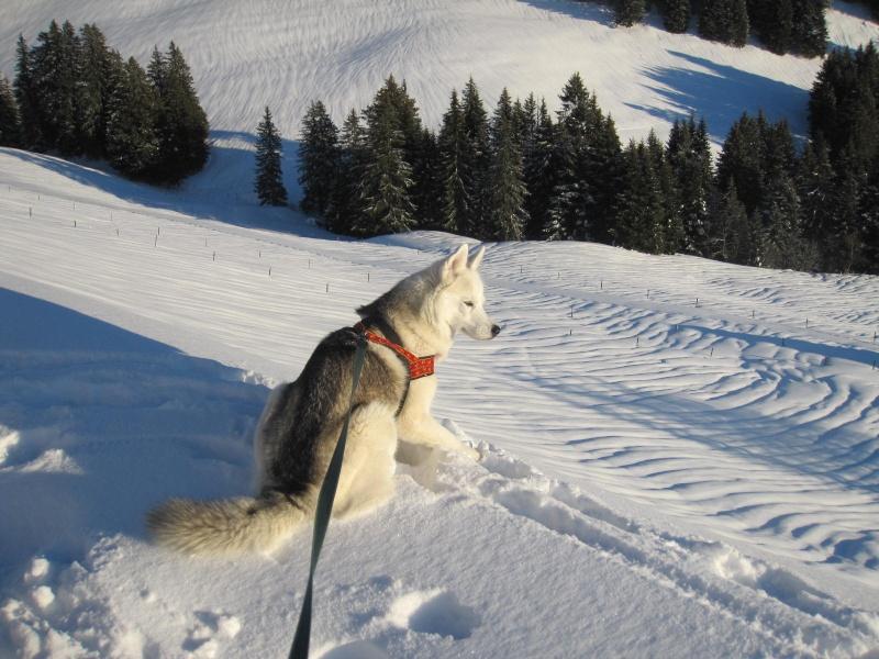Saskia dans la neige en décembre 2011 621