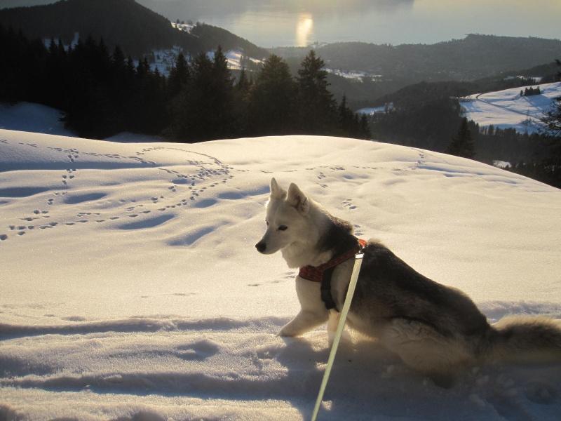 Saskia dans la neige en décembre 2011 623