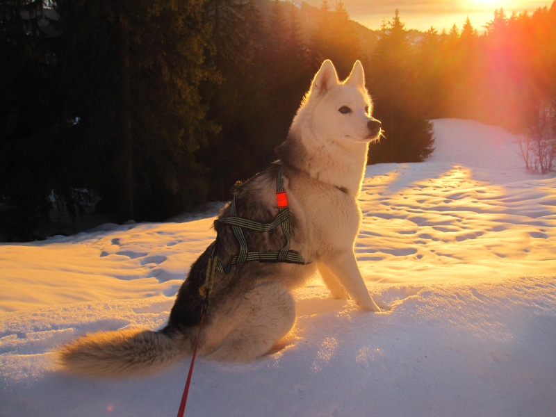 Saskia dans la neige en décembre 2011 - Page 2 624