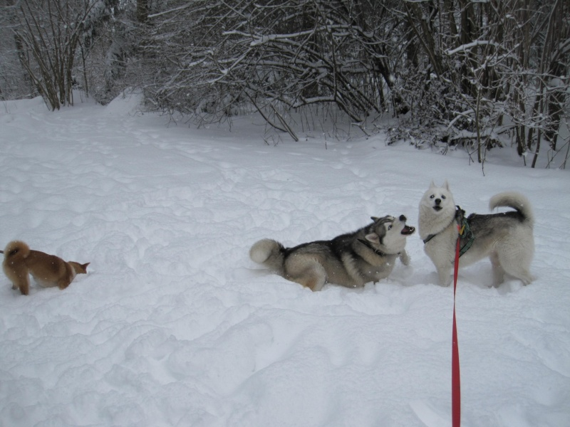 Nouvelles courses de Saskia dans la neige 640