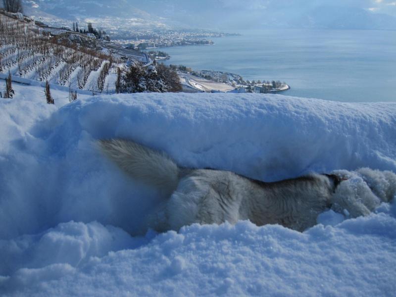 Nouvelles courses de Saskia dans la neige 642