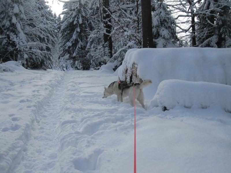 Nouvelles courses de Saskia dans la neige 643