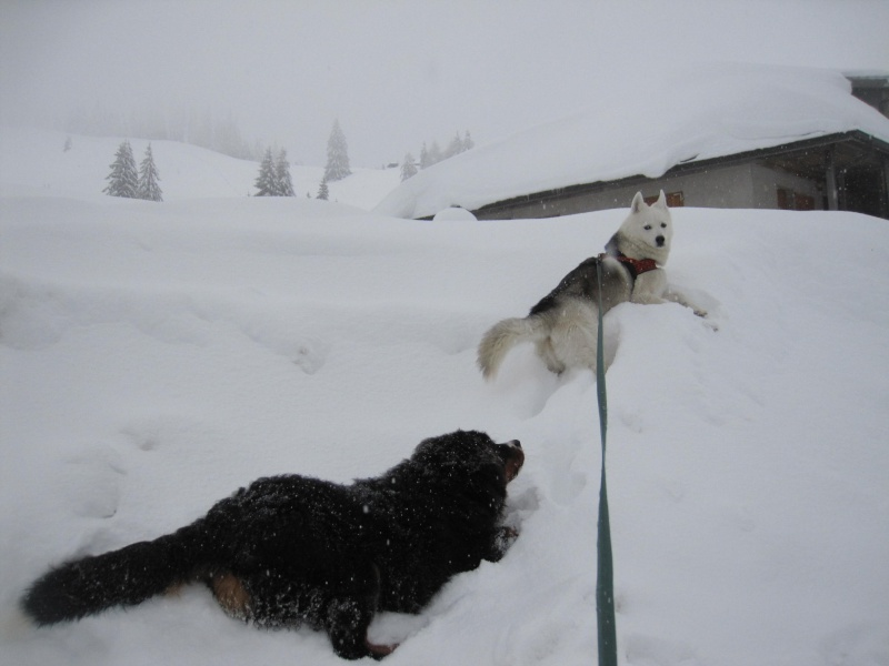 Nouvelles courses de Saskia dans la neige 645