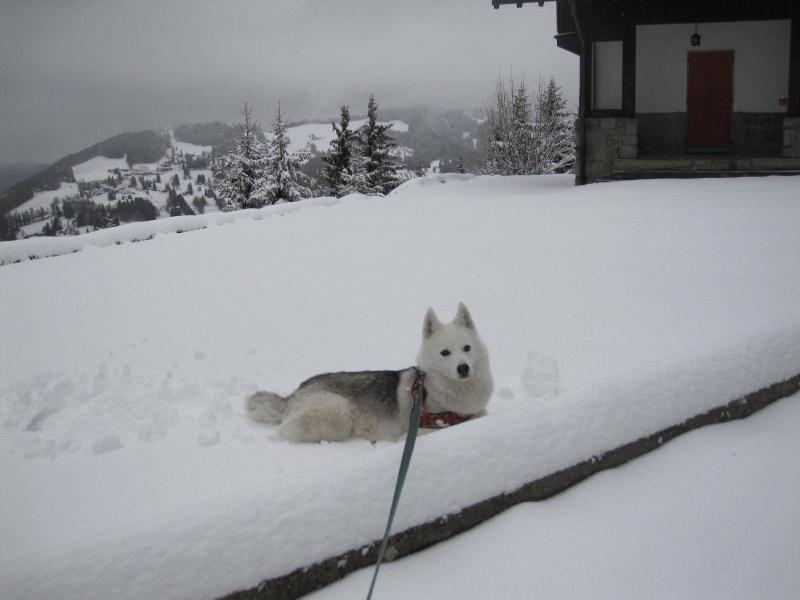 Saskia dans la tempête... 713