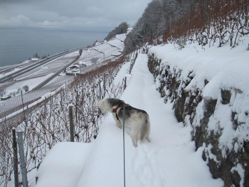 Saskia dans la neige en décembre 2011 715