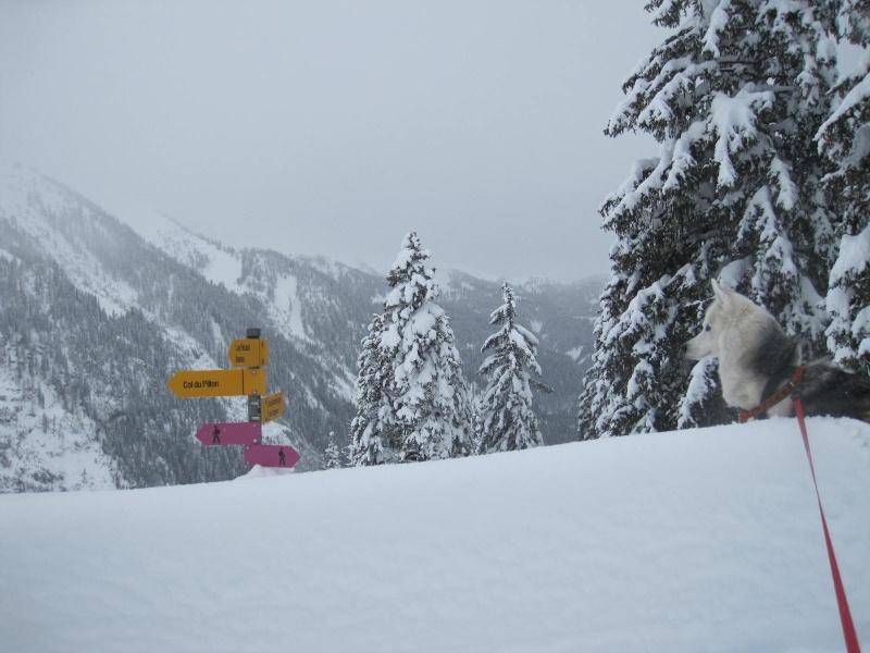 Saskia dans la neige en décembre 2011 718