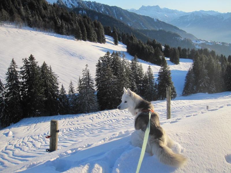 Saskia dans la neige en décembre 2011 719