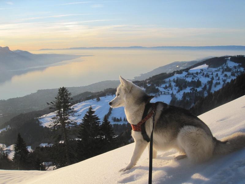 Saskia dans la neige en décembre 2011 720