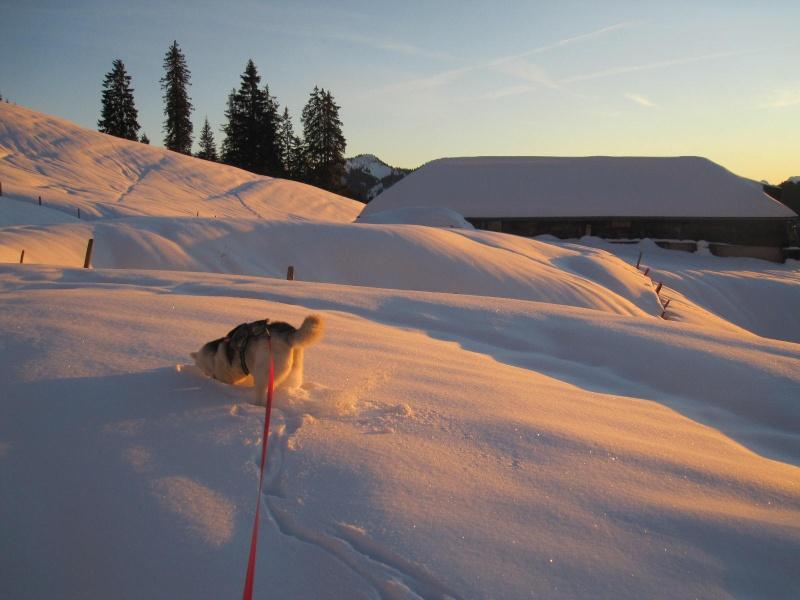 Saskia dans la neige en décembre 2011 - Page 2 721