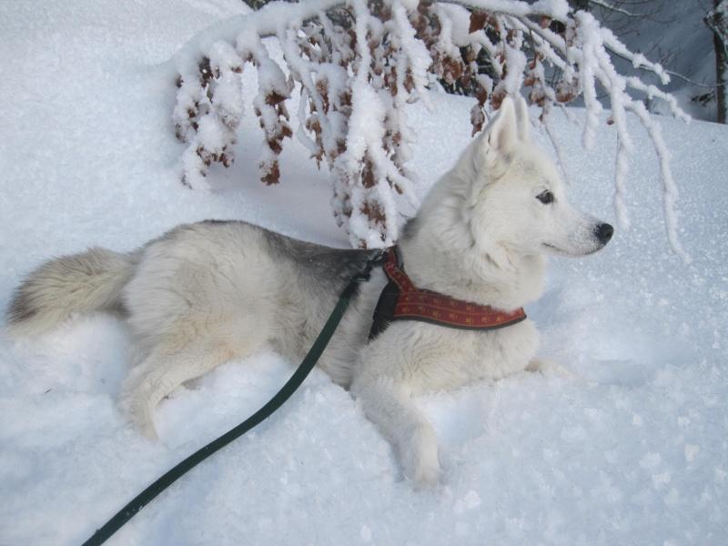 Saskia dans la neige givrée 726