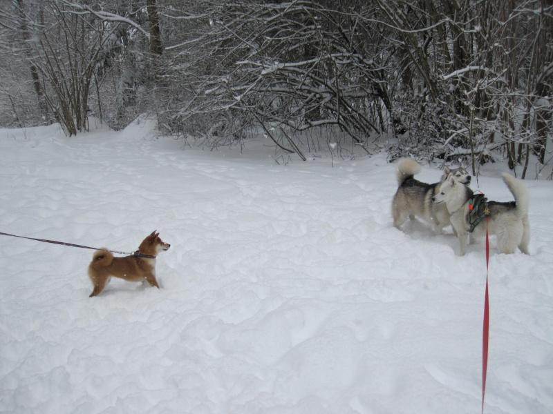 Nouvelles courses de Saskia dans la neige 735