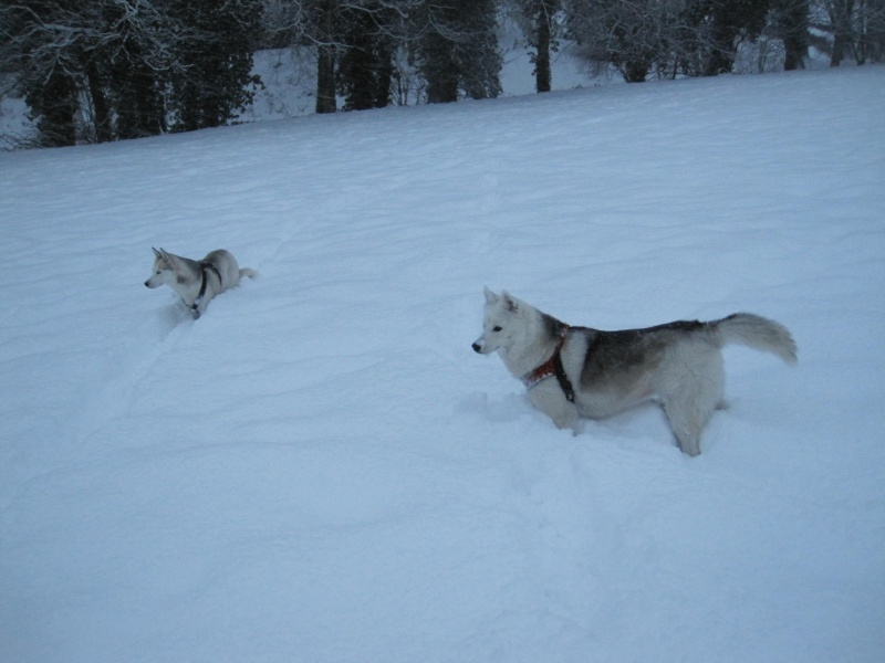 Nouvelles courses de Saskia dans la neige 736