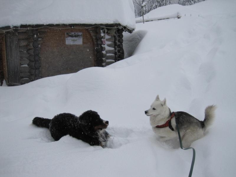 Nouvelles courses de Saskia dans la neige 740