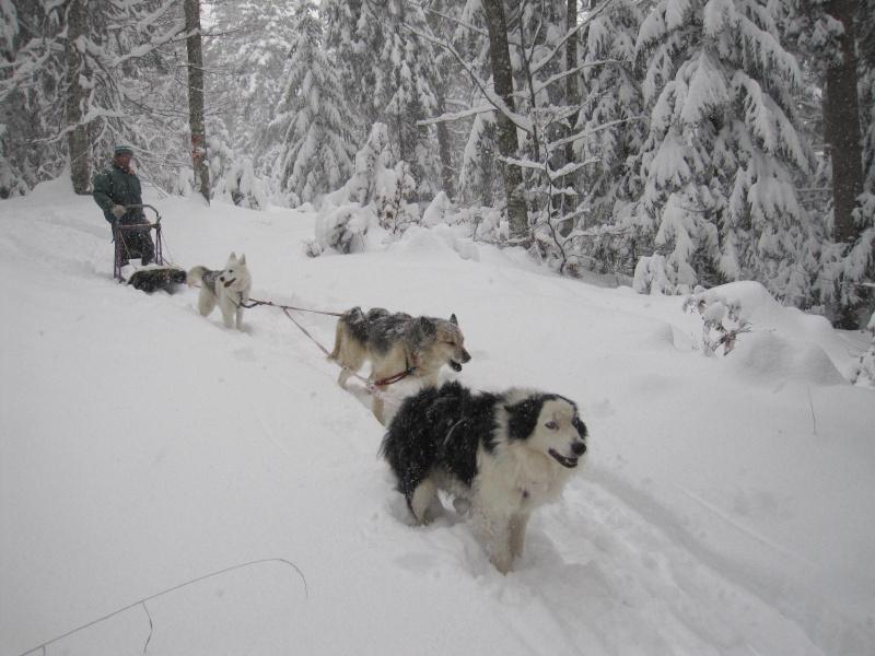 Deux attelages perdus dans 50 cm de neige poudreuse! 814