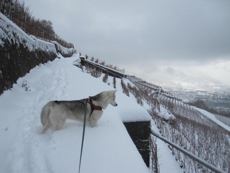 Saskia dans la neige en décembre 2011 815