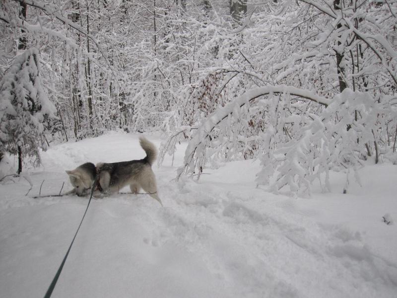 Saskia dans la neige en décembre 2011 816