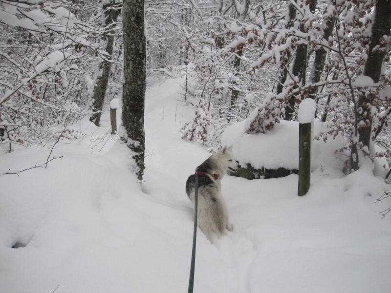 Saskia dans la neige en décembre 2011 817